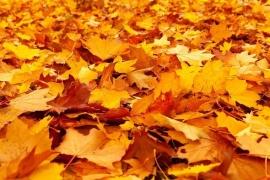 Nie palmy liści i gałęzi!