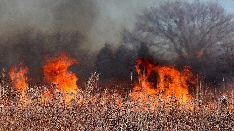 Przypominamy - wypalanie traw jest zabronione!