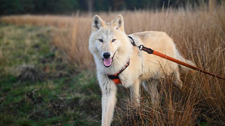 Nowe grzywny za niewłaściwą opiekę nad psem